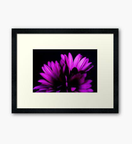 Purple #3 Framed Print