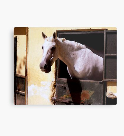 Watercoloured horse Metal Print
