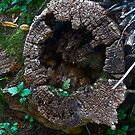 Wood Pile by Trevor Kersley