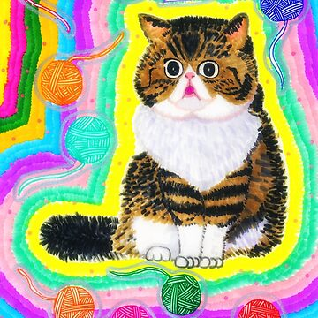 Exotic Shorthair Cat  by chippychowmein