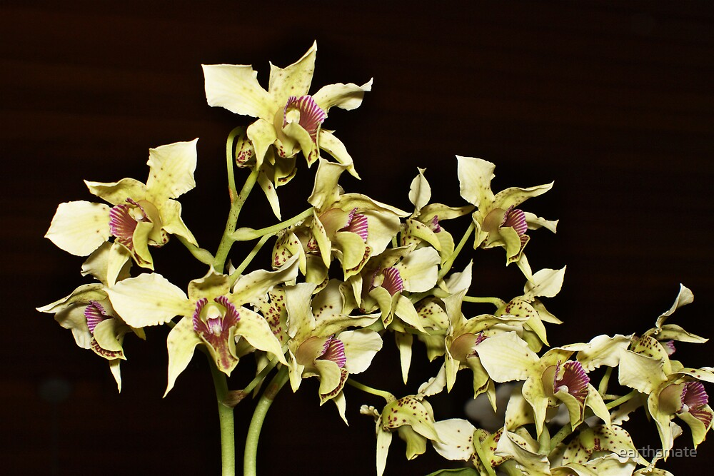 Orchid Series - Yellow Orchid by earthsmate