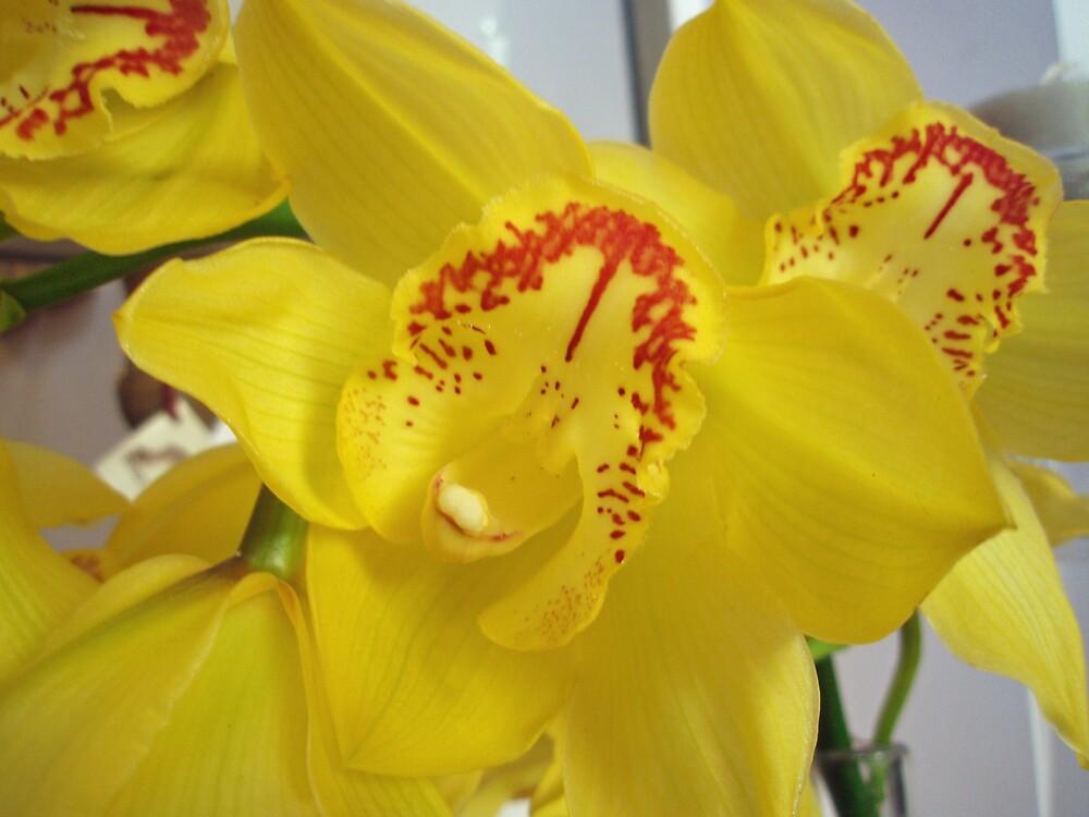 Orchid by presbi