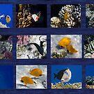 Hurmerinta Red Sea Sealife Collage by hurmerinta