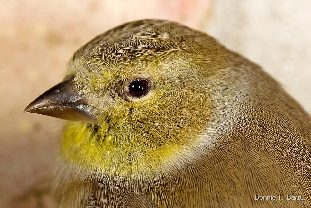 Goldfinch Encounter by Bonnie T.  Barry