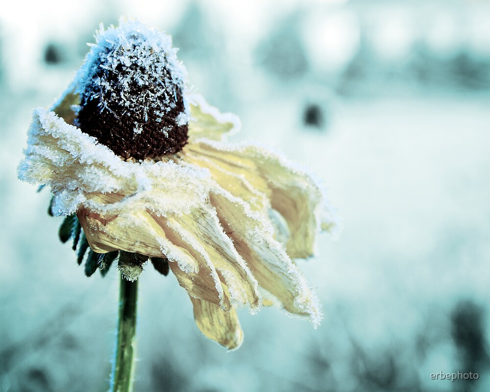 First Frost by erbephoto