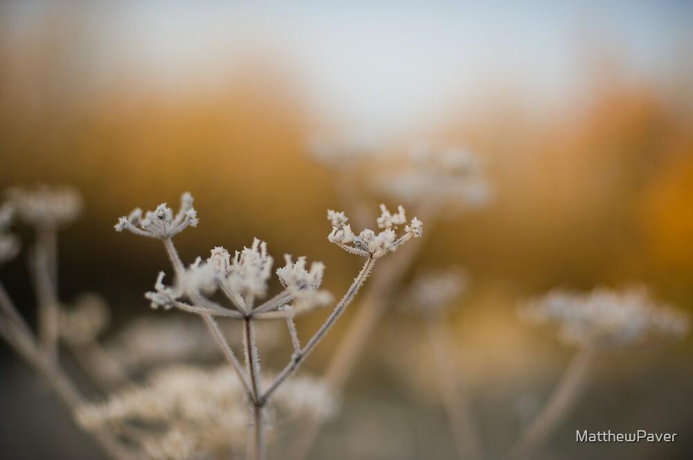 Frosty winter plant by MatthewPaver