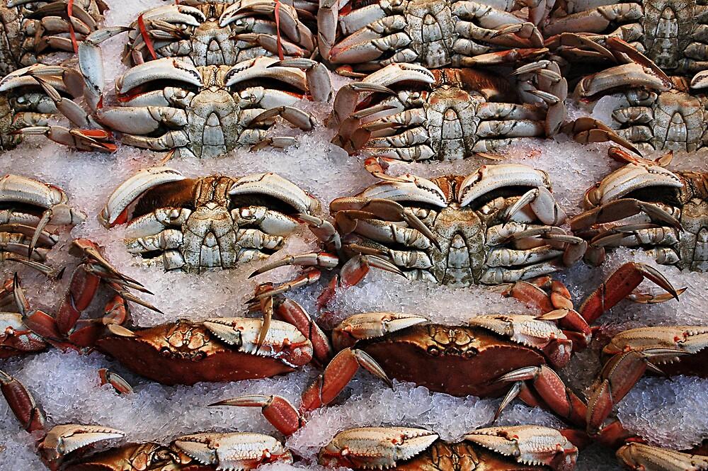 Crabs by avantgardenias