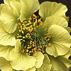 What A Geum  by CJ Anderson