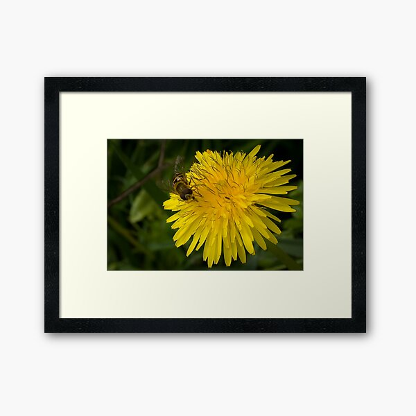Golden nectar meal Framed Art Print