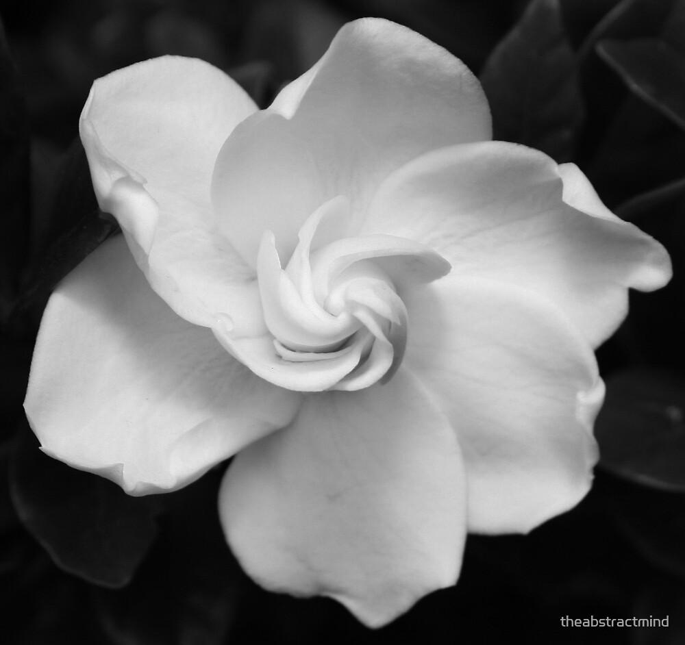 gardenia by theabstractmind
