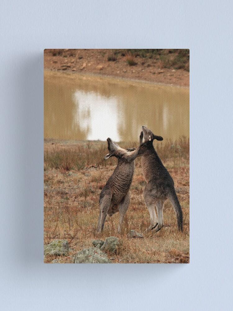Alternate view of Boxing Kangaroos Canvas Print