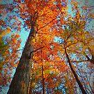 Virginian Autumn by Leon Heyns
