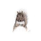 Friendly Squirrel by LauraMuirhead