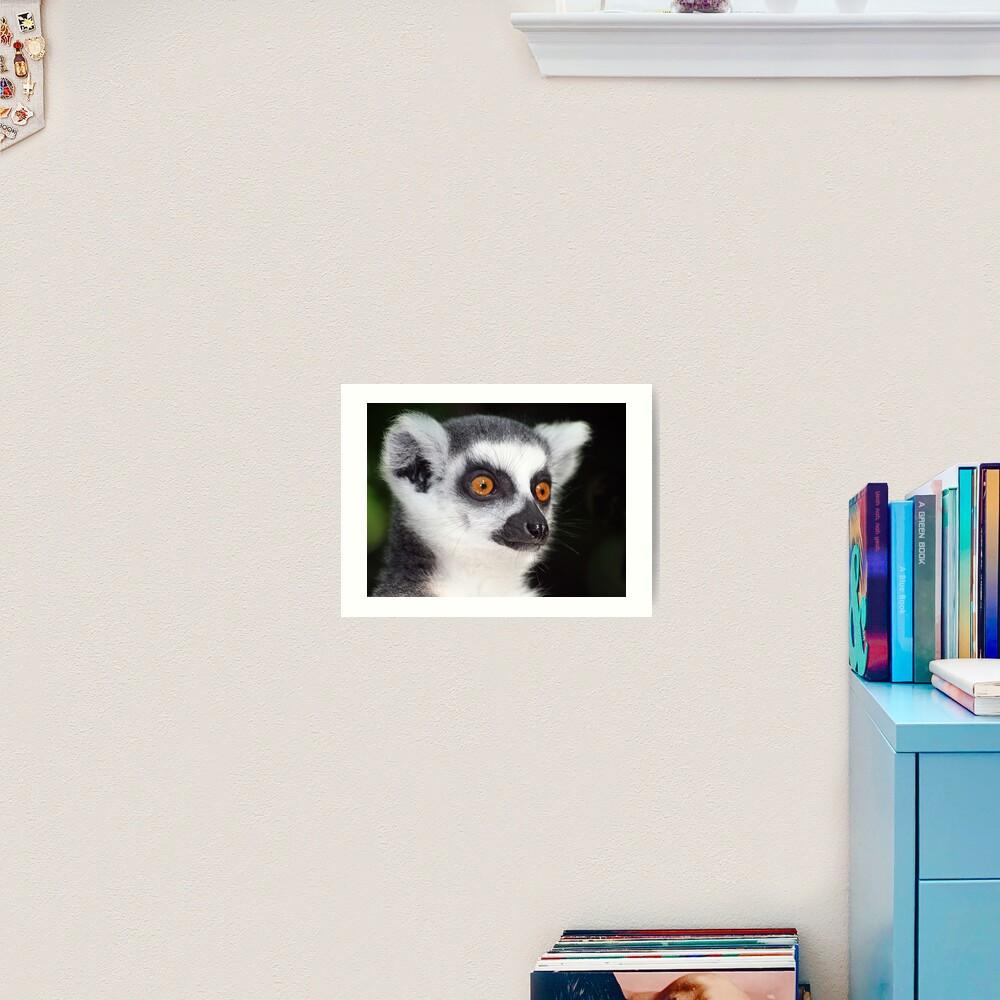 Ring-tailed Lemur Portrait 2 Art Print