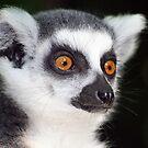 Ring-tailed Lemur Portrait 2 by Amanda White