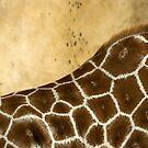 Giraffe Abstract by Amanda White