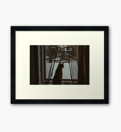 Cat Zen Framed Print