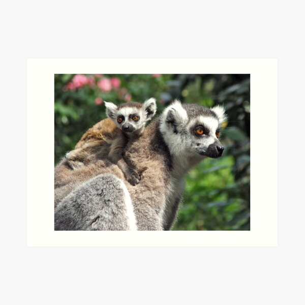 Ring-tailed Mother & Baby Art Print