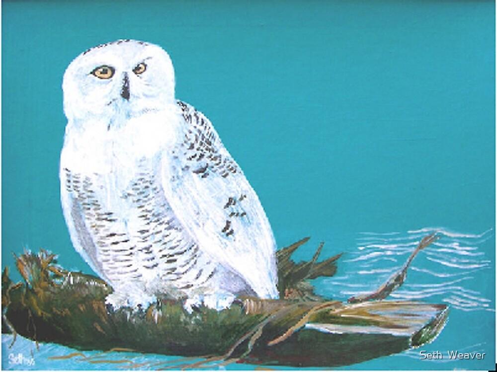 Snowy Owl by Seth  Weaver