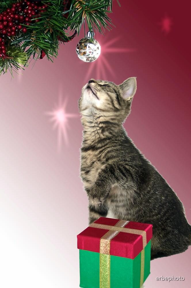 Christmas Kitten 2 by erbephoto