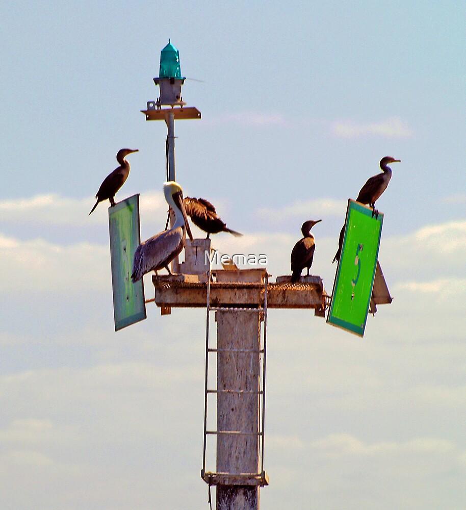 Pelican and Cormorants on Marker 5 by Memaa