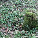 Tree stump by Katherine Hartlef