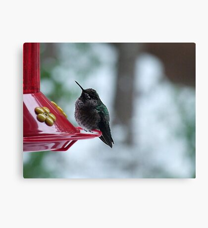 Hummer in Winter Canvas Print