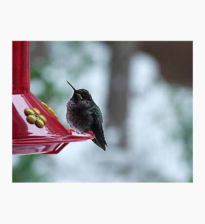 Hummer in Winter Photographic Print