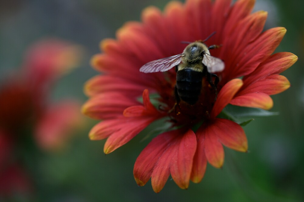 awsome bee by scott derryberry