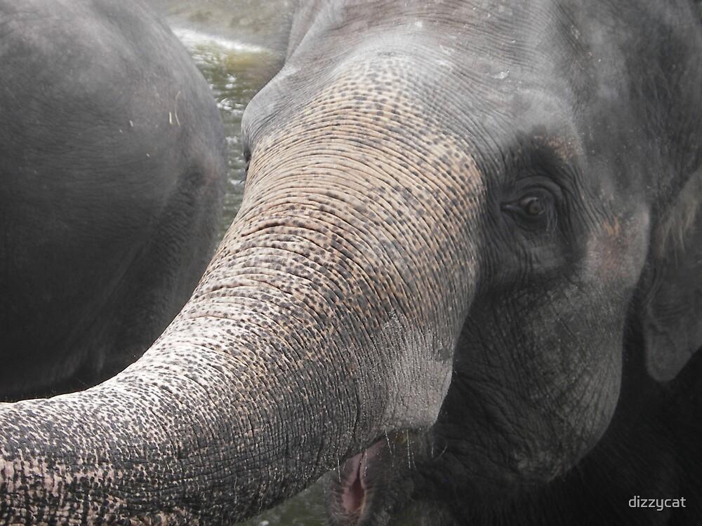 Elephant by dizzycat