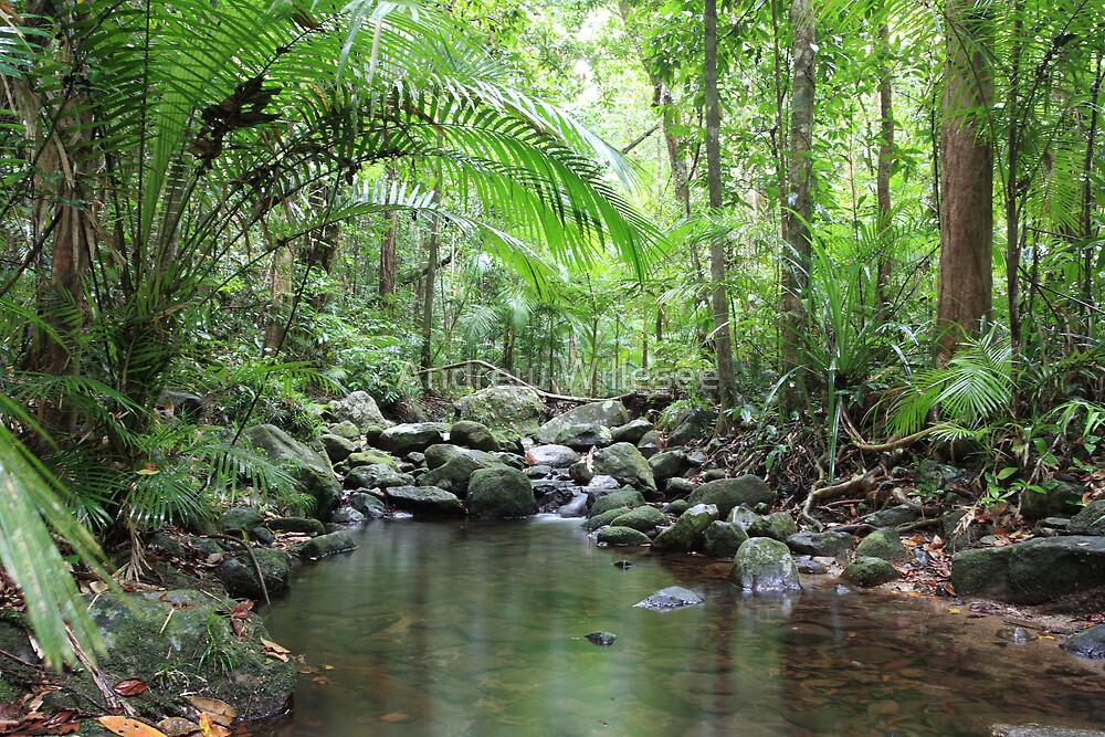 The Daintree by Andrew Willesee