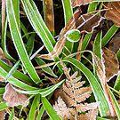 Frosty Green & Brown by Paul Finnegan