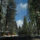 Sierra by Nikki Collier