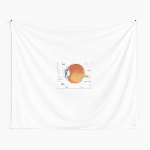 The eye diagram for kid's human anatomy diagrams Tapestry