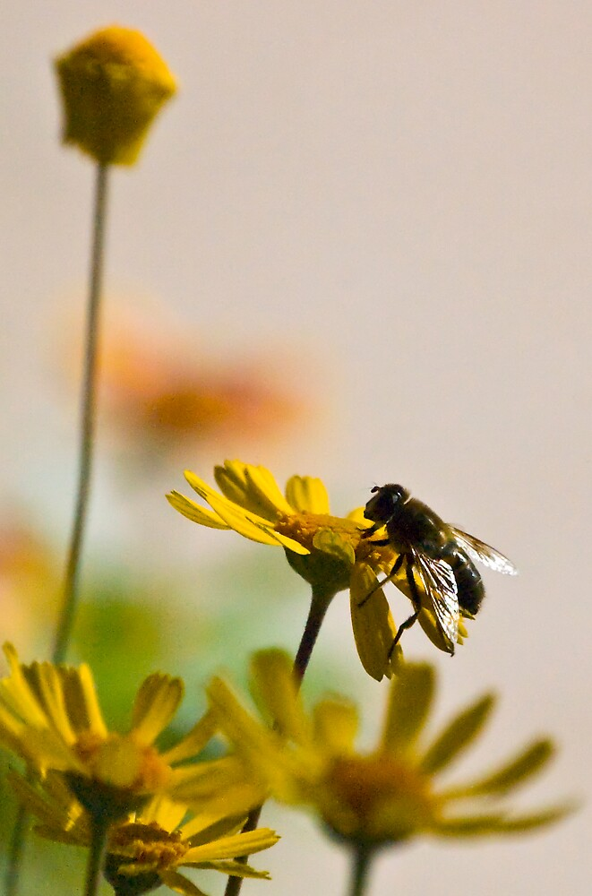 Working bee by Andrea Trotter