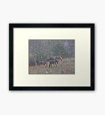 Snowy Pasture Framed Print