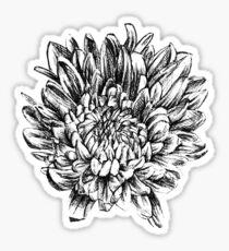 Chrysanthemum in black Sticker