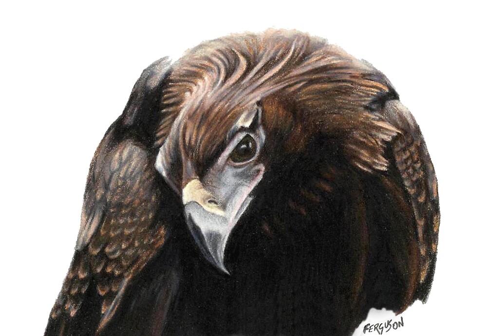 Wedgetail eagle 2 by Judy Ferguson