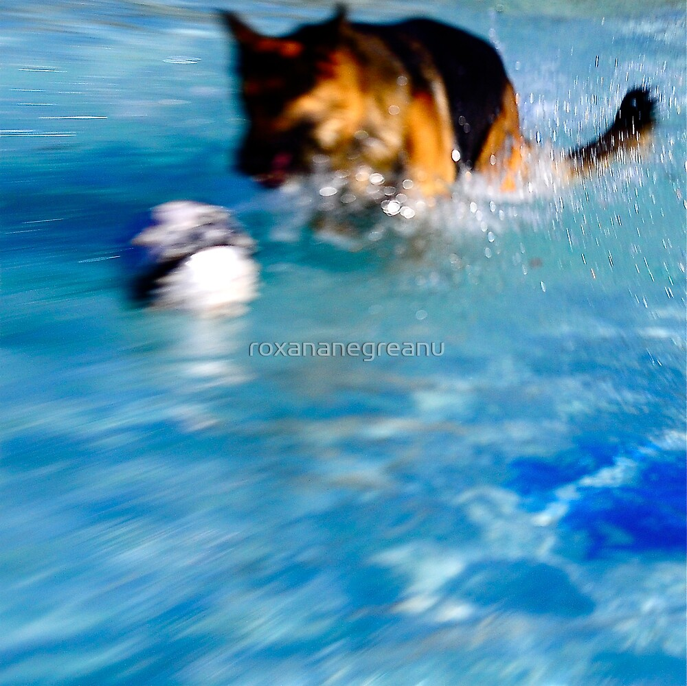 A Dog's Summer Fun by roxananegreanu
