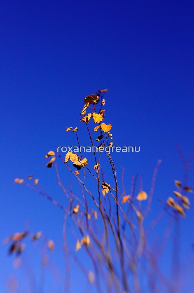 yellow, blue, flowers, sky by roxananegreanu