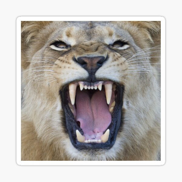 The Lions Mouth Opens Sticker