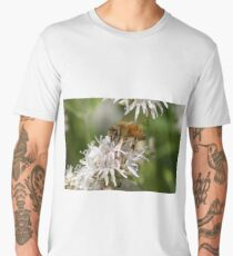 Honey bee and Mtn Coyote Mint, Lassen Volcanic NP, CA  Men's Premium T-Shirt
