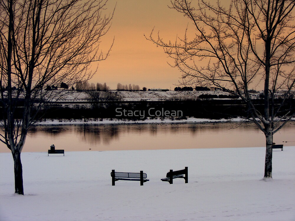 Beautiful Snow In The Park by Stacy Colean