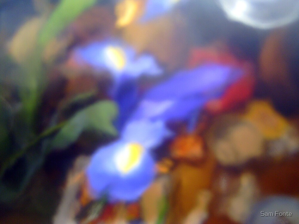 iris blur # 1 by Sam Fonte