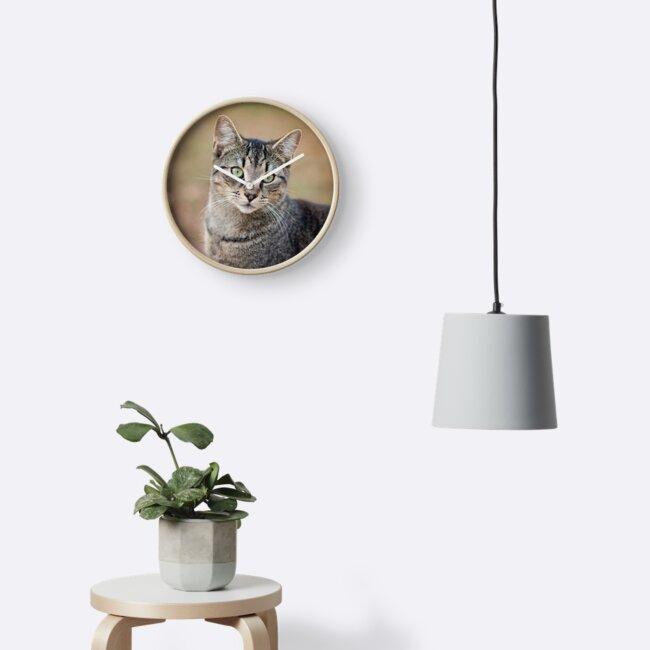 Theo the cat by Brandy Watkins