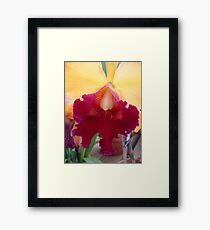 Luscious Lips - Cattleya Framed Print