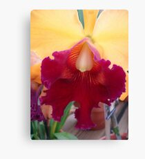 Luscious Lips - Cattleya Canvas Print