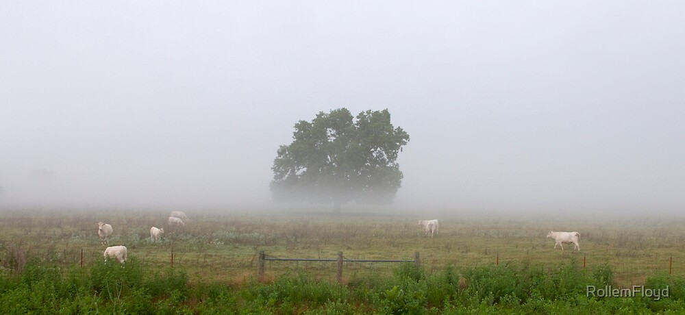 Cows on a foggy summer morning.   by RollemFloyd