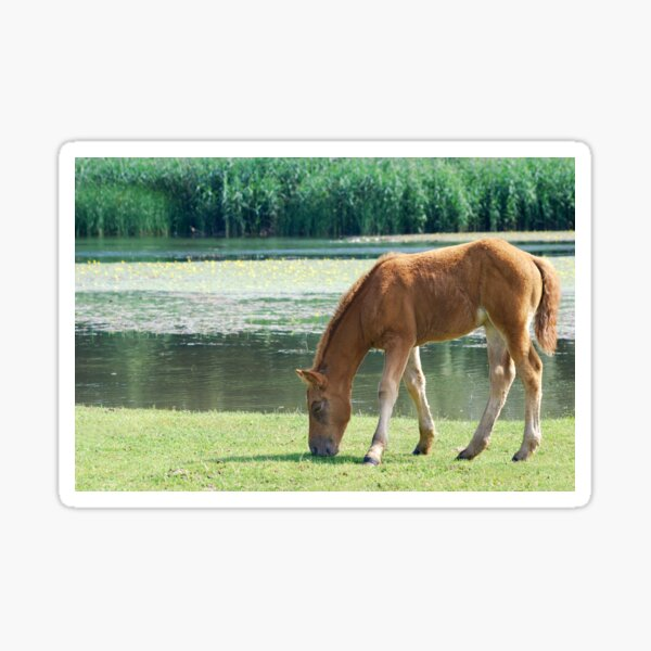 Brown horse foal on pasture Sticker