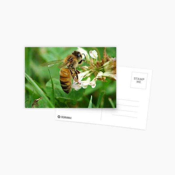 Honey Bee Feast of the Clover Postcard